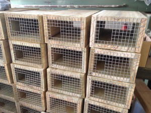 Rat trap boxes ready to go!