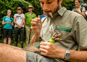 Barney the kiwi gets his transmitter checked by Rolf Fuchs from DOC