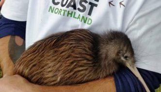 Tutukaka Landcare Kiwi Release