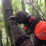 Tohu the Kiwi Dog